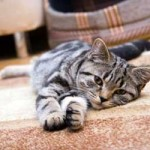 3 Effective Ways of Removing Pet Hair in Your Home