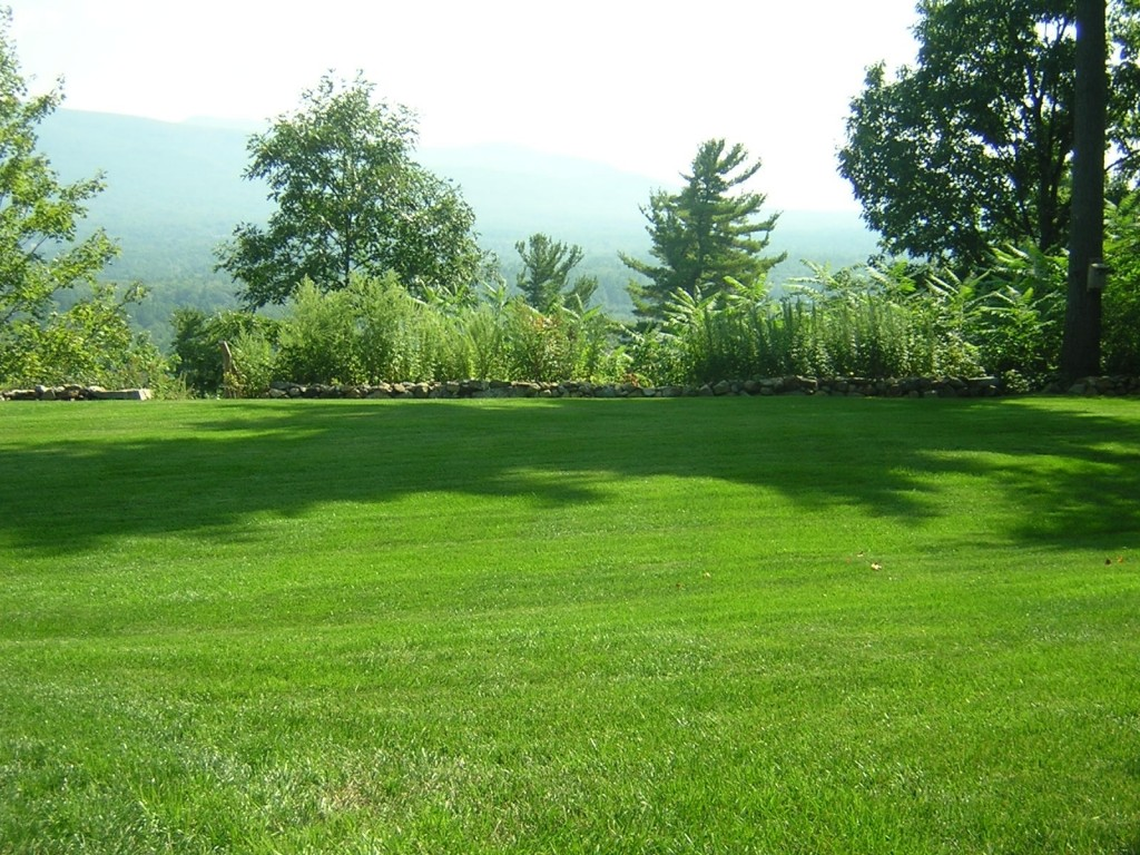 How to choose grass lawn alternatives froodee for Best grass for landscaping