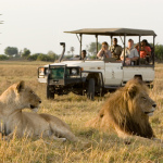 Making the Most of Your African Safari
