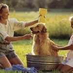 4 Reasons to Regularly Bathe Your Dog