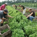 5 Ways To Join the Organic Movement