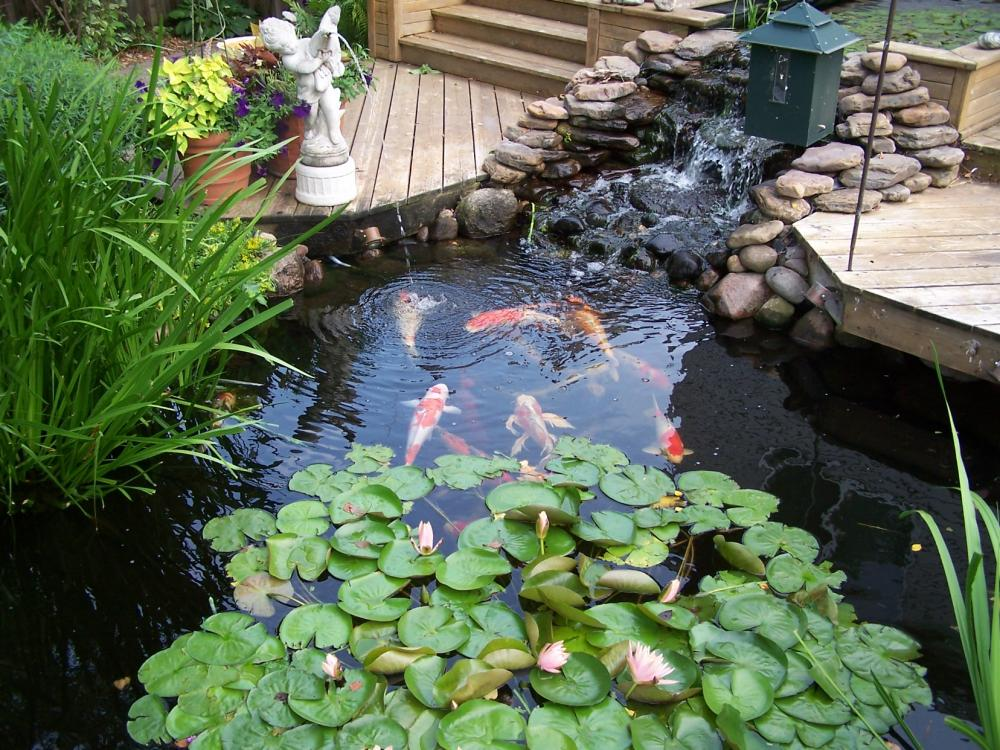 Creating an outdoor sanctuary in your yard froodee for Koi pond garden